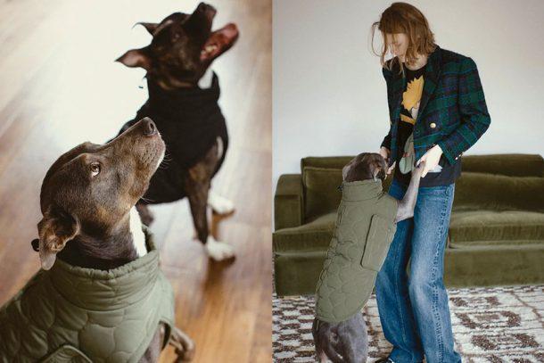 Zara 推出 Pet Collection,讓愛寵成為最時尚毛孩吧!