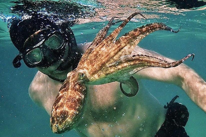《我的章魚老師》(My Octopus Teacher)