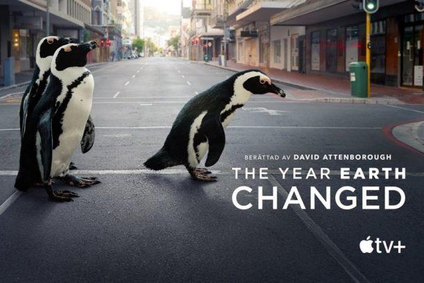 企鵝在街上自由行走、奈良小鹿活得更健康?Apple TV+ 原創紀錄片《這一年,地球變得不一樣》帶來後疫情時代的反思。