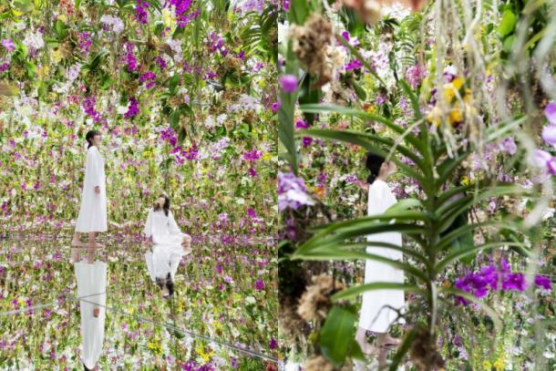 teamLab 最新「漂浮花園」,過萬蘭花漂浮空中猶如進入夢幻仙境!