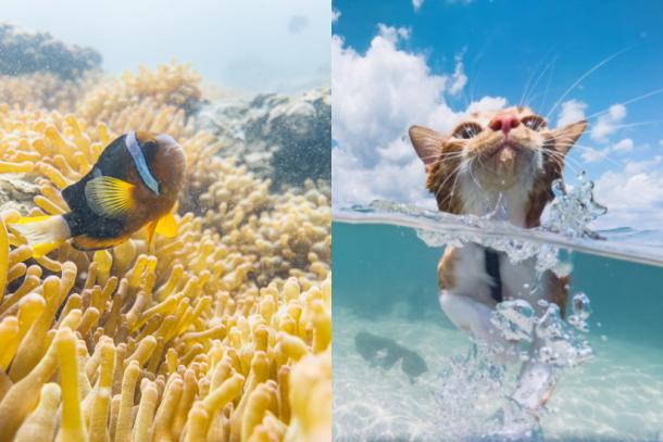 iPhone 超高清水攝!本地攝影師 Max Tang 手機紀錄西貢絕美海洋生態
